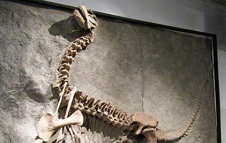 Byu Museum Of Paleontology Image