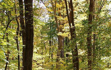 Mccormick Park Image