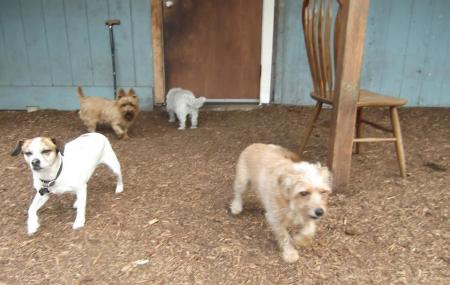 Adventure Dog Ranch Image