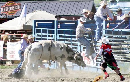 Roy Pioneer Rodeo Image