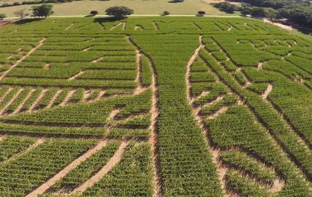 Mckee Cornfield Maze Image