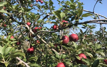 Jones Orchard Image