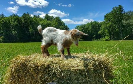 Sweet Meadow Farm Image