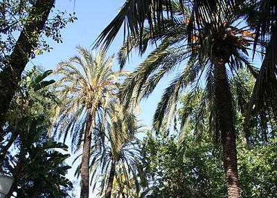 Parque De Malaga Image