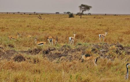 Serengeti National Park Image