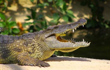La Planete Des Crocodiles Image