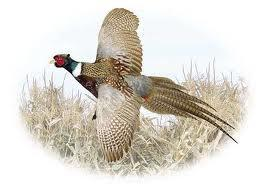 Stoney Creek Hunting Preserve L L C Image