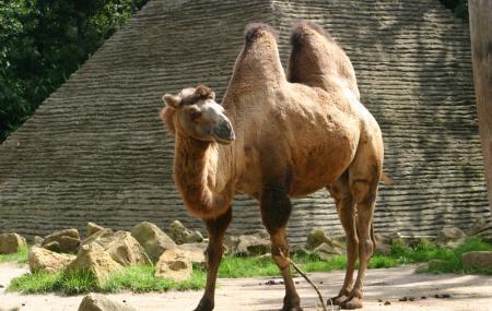 Zoo D'amneville Image