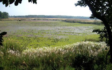 Shuklaphanta National Park Image