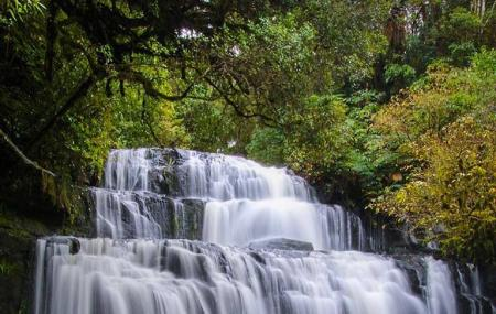 Purakaunui Falls Walk Image