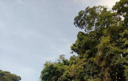 Cherok Tokun Nature Park Image