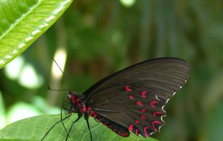 Butterfly Pavilion And Insect Center Image