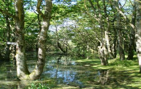 Reserve Nationale De Chasse Et De Faune Sauvage Du Lac Du Der-chantecoq Image