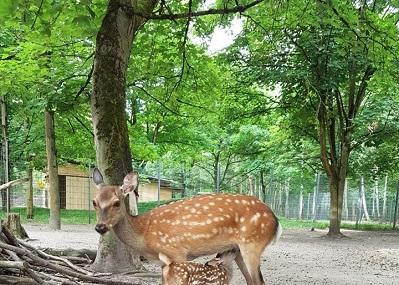 Tierpark Walldorf Image