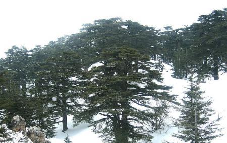 The Cedars Of God Image