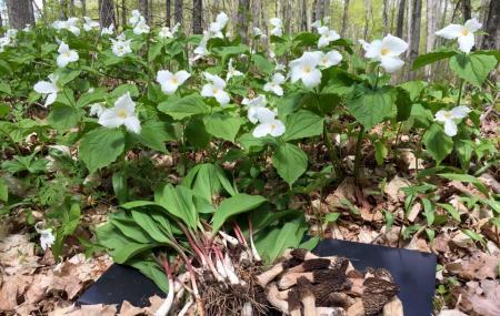 Goodhart Farms Nature Preserve Image