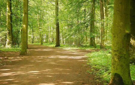 Eilenriede - Park Image