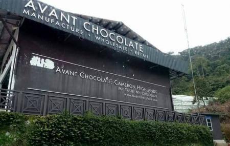 Avant Chocolate Cameron Higlands Image