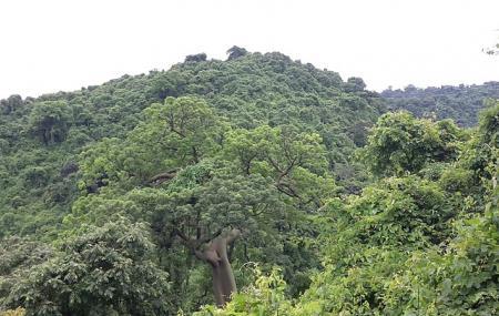 Bosque Protector Cerro Blanco Image