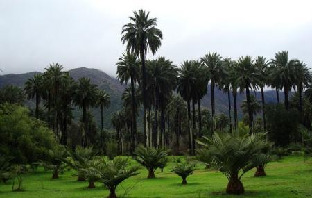 Las Palmas De Cocalan National Park Image