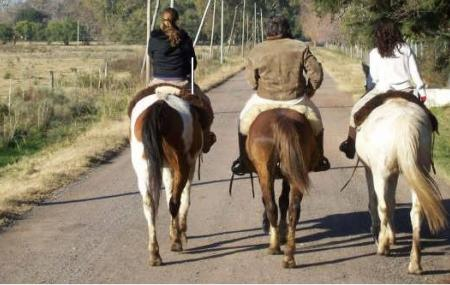Criollos La Guatana - Rancho Viejo Cabalgatas Image