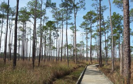 Big Branch Marsh National Wildlife Refuge Image