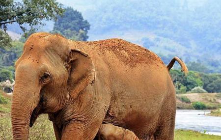 Happy Elephant Home Image