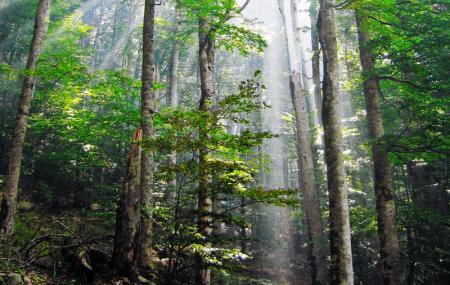 Biogradska Gora National Park Image