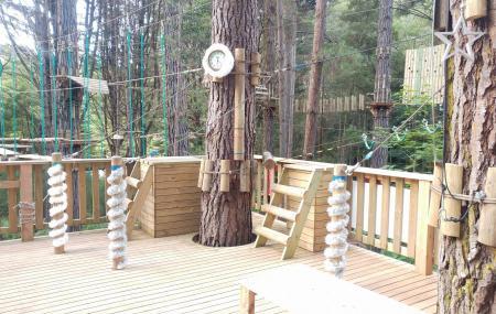 Hollybank Treetops Adventure Image