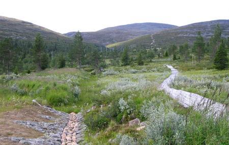 Pallas-yllastunturi National Park Image