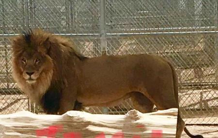 Lion Habitat Ranch Image