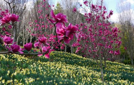 Looking Glass Garden Image
