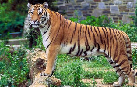 Mundanthurai Tiger Reserve Image