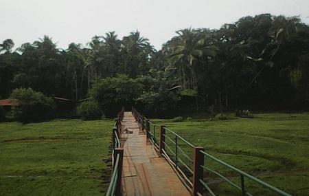 Tropical Spice Plantation Image