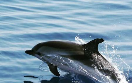 Dolphin Rides Image