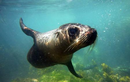 Seal Swim Kaikoura Image