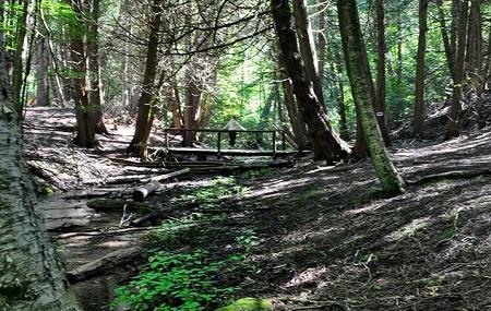 Ganaraska Forest Image