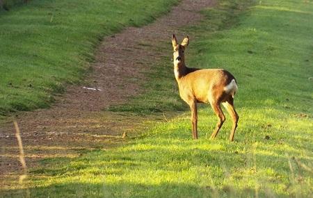 Kiveton Community Woodland Image