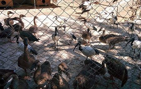 Tashkent Zoo Image