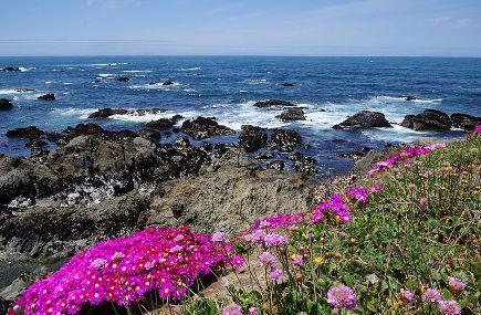 Mendocino Coast Botanical Gardens Image