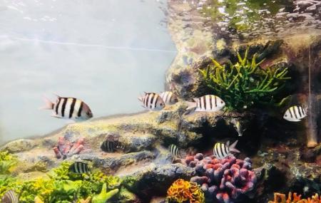 Songkhla Aquarium Image
