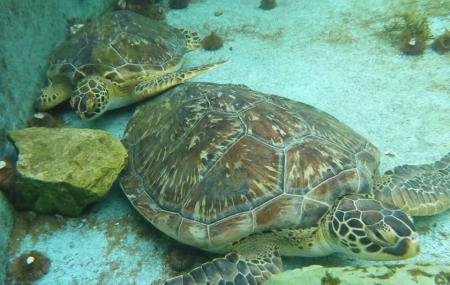 Gulf Specimen Marine Laboratories Image
