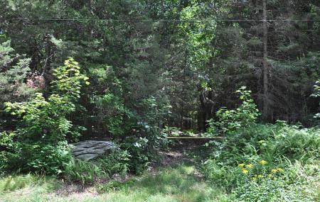 Mohegan State Forest Image