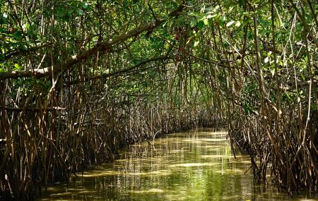Mangrove Forest Image