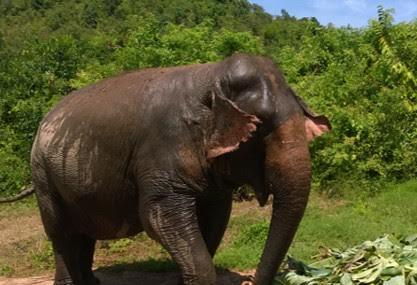 Hutsadin Elephant Foundation Image