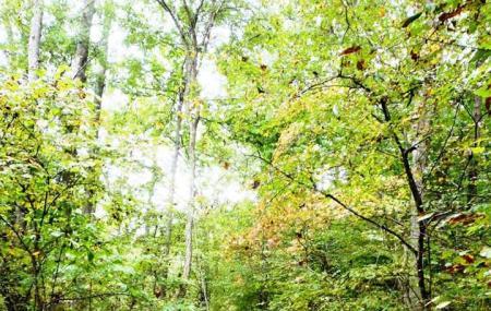 Appomattox-buckingham State Forest Image