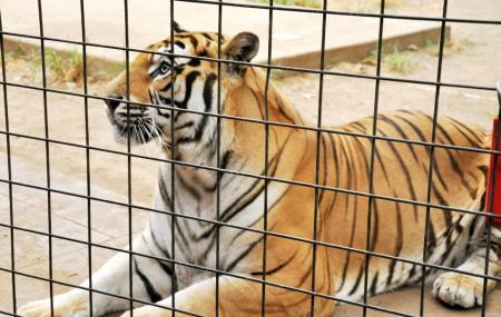 Safari Zoological Park Image