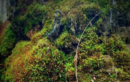 Mount Holly Sanctuary Image