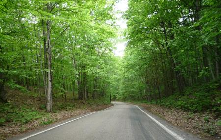 Tunnel Of Trees Image