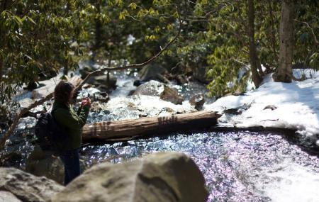 Glen Onoko Falls Trail Image